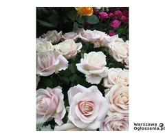 Szukam florystów