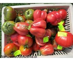 POMIDORY I PAPRYKI - 600 odmian wolnych od GMO !