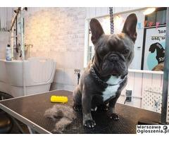 Malowany Pies psi fryzjer Warszawa