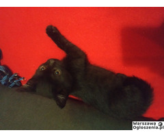 Śliczna 4mies koteczka szuka dobrego człowieka