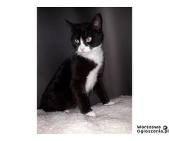 Antoś, 6 miesięczny kociak szuka domu!