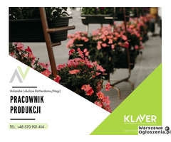 Praca w Holandii-kwiaty cięte, doniczkowe -oda zaraz